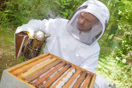 oudoor: fuming the bees