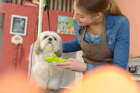 groomer: the dog and the groomer Stock Photo