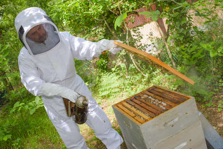 apiarist: Beekeeper lifting the lid off the hive Stock Photo