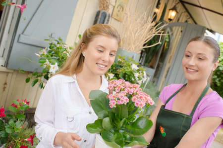Cliente que elige una planta en la floristería