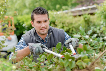 man trimming hedge Stock Photo
