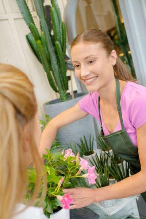 advise: cactus on the shop Stock Photo