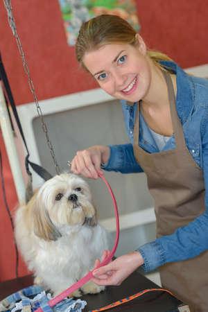 groomer: Portrait of pet groomer
