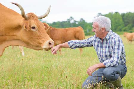 vaca: Ganadero
