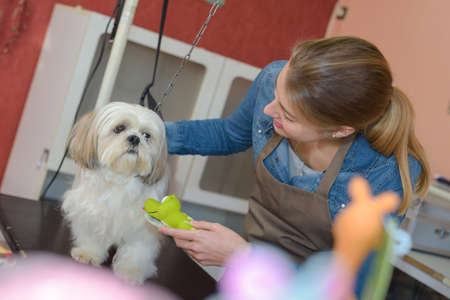 trimmers: woman and dog at pet grooming salon
