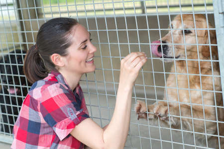 muster: cheerful woman gives dog sweets through the fence