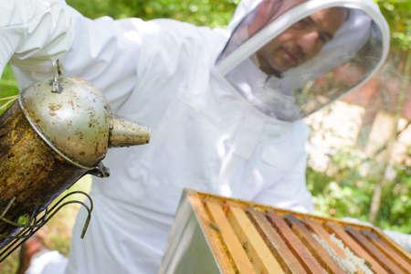 fumigador: Primer plano de apicultor con fumador
