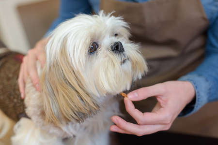 Pet groomer holding tag under dogs muzzle