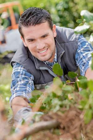 paysagiste: Workin paysagiste