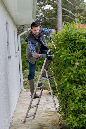 paysagiste: L'homme sur la couverture de taille escabeau avec sécateurs Banque d'images