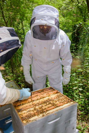 apiarist: Two people working on beehive Stock Photo