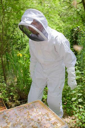 beekeeper preparing to check Stock Photo