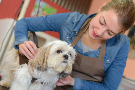 groomer: Pet groomer with small dog Stock Photo