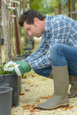horticulturist: Horticulturist tending trees