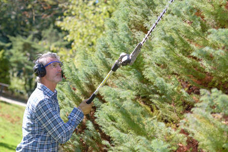 periodical: trimming the hedge