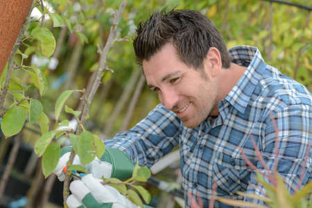 horticulturist: Horticulturist at work