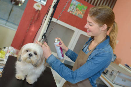 groomer: Dog groomer using aerosol spray