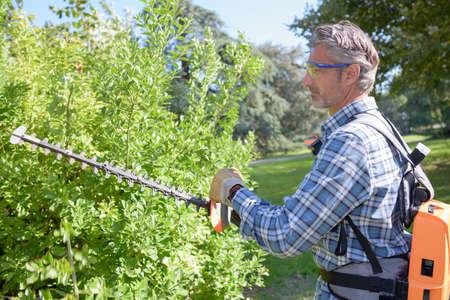 bush trimming: trimming the bush