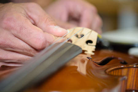 Luthier at work