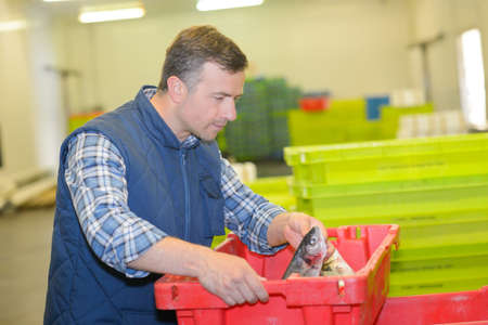 Worker lifting crate of fresh fish Stock Photo