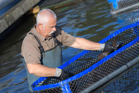 niloticus: senior man working at a farm of floating basket