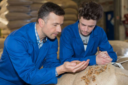 workers checking the quality of tobacco mixture in packaging Stock Photo