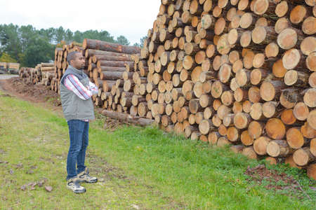attractive woodcutter in her exploitation