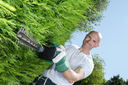man cutting a hedge