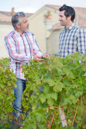 two happy gardeners standing together in grapes tree yard