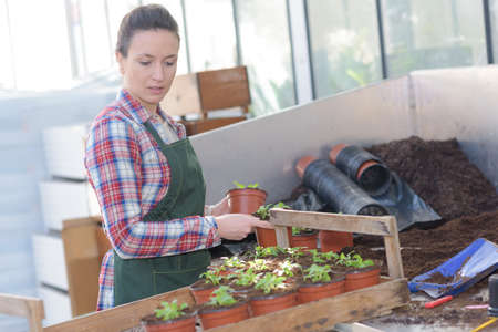 female botanist seeding and checking growing plants in greenhouse