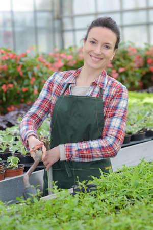 gardener with plants at home Stock fotó