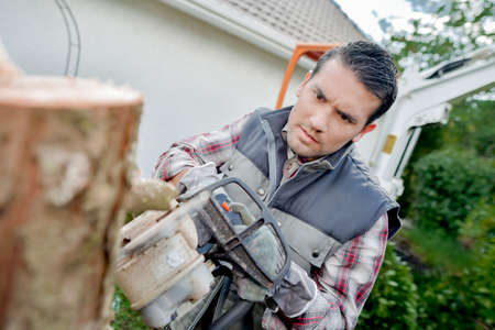 Sawing into a tree trunk Stock Photo