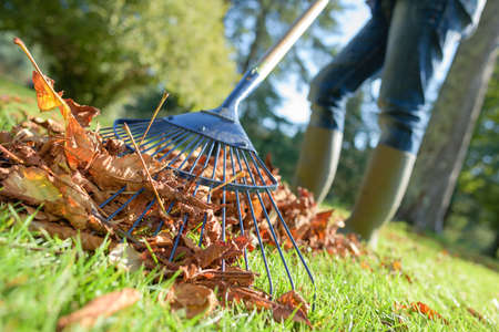 close up of rake and fallen leaves with grass