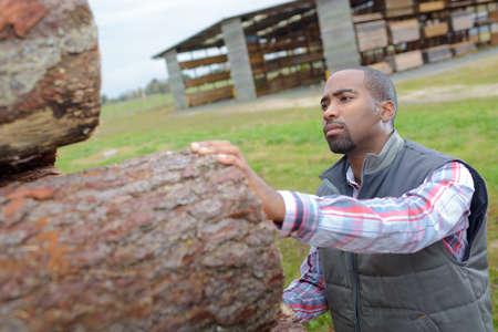 worker inspecting wood Stockfoto