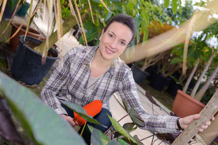 female gardener smiling while inspecting leaves at greenhouse