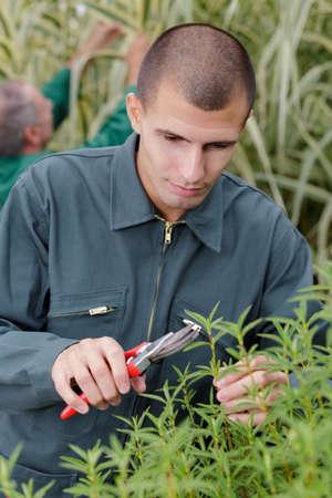 male gardener during training