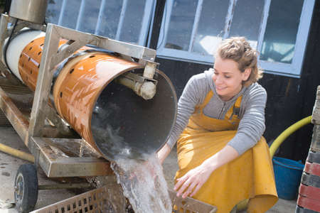 female worker washing and sorting oysters