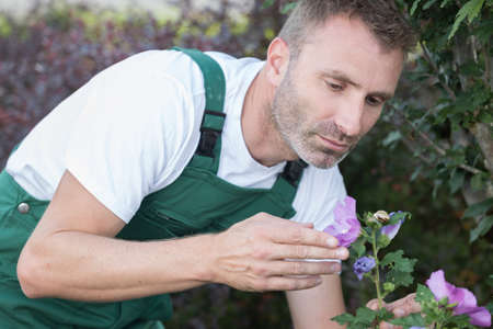 man gardening outside in summer nature cutting roses