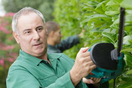 close up of a man cutting a hedge Zdjęcie Seryjne - 134960203