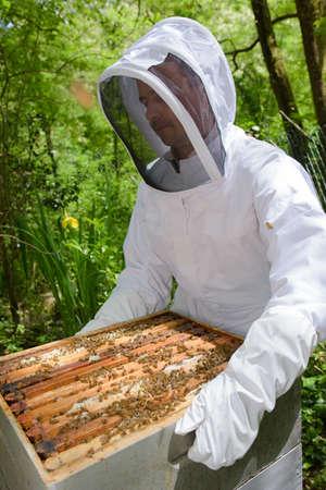 an apiculturist opening a frame