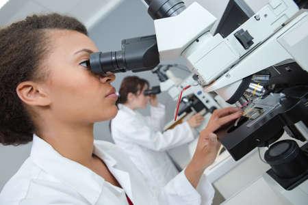 laboratory professional examining organism under the microscope