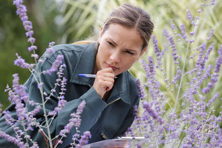 portrait of beautiful young woman working on lavender field