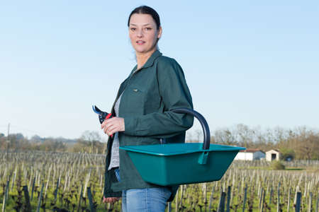 woman in vineyard holding wicker basket for grape picking Stock Photo