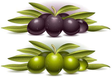 composición de dos aceitunas Ilustración de vector