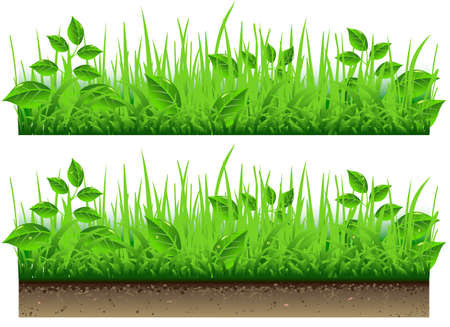 Detailed illustration of a Grass Border Vector