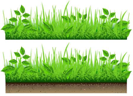 příroda: Detailní ilustrace Grass Border