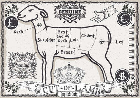 mutton: Detailed illustration of a Cut of Lamb on Vintage Page Illustration