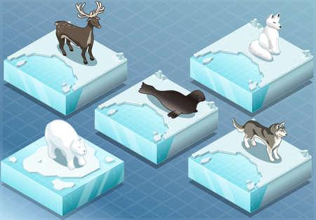 osos navideños: Ilustración detallada de una isométricos Animales del Ártico en el hielo