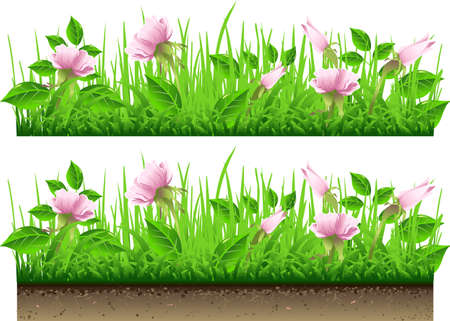 grass border: Detailed Illustration of a Grass Border with Flowers Isolated On White Background