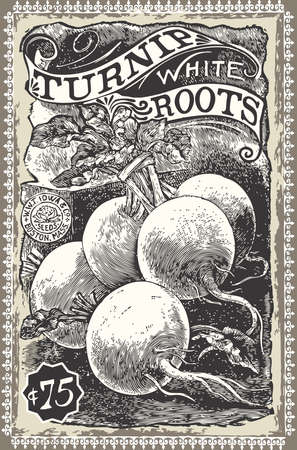 rzepa: Szczegółowe Ilustracja Vintage warzywniaku - Rzepa Reklama